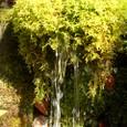 雨飾山の湧き清水